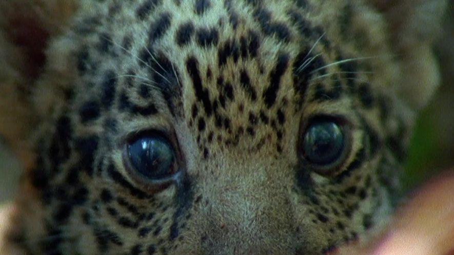 Top 10 Filhotes Selvagens: Filhotes Sobreviventes