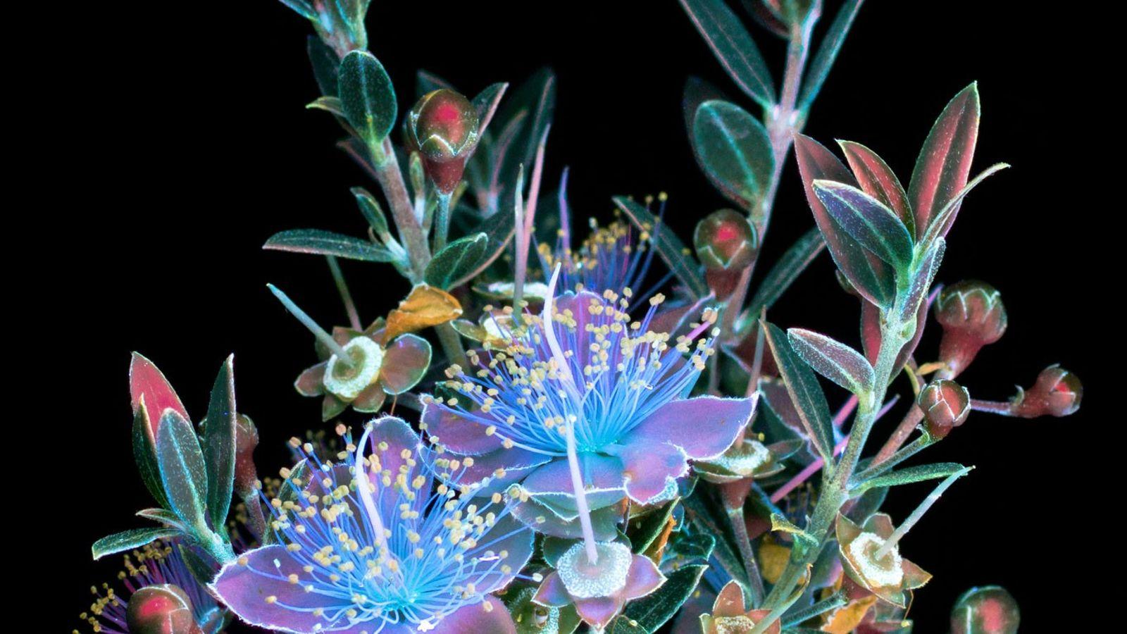 buque-de-flores-luz-ultravioleta