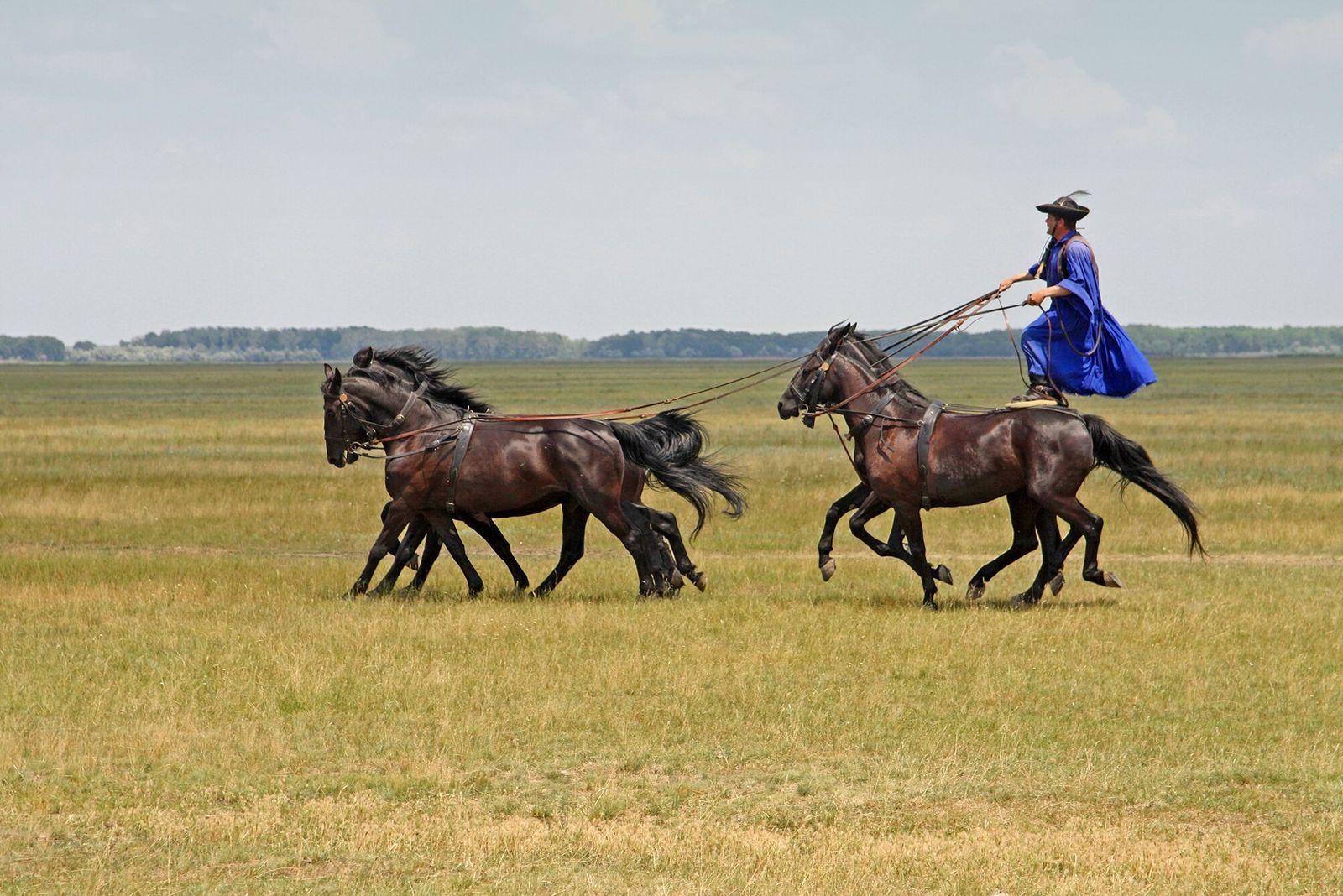 Hortobágy, Hungria | Um csikós húngaro (um tradicional pastor de cavalos) exibe suas habilidades de equitação no ...