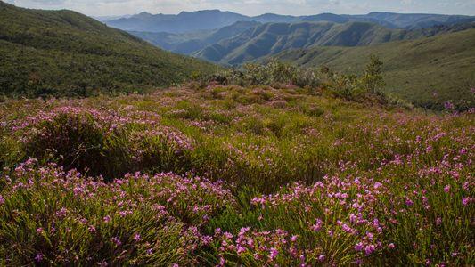 Mesmo com solo pobre e clima árido, ecossistema brasileiro é um dos mais diversos e antigos ...