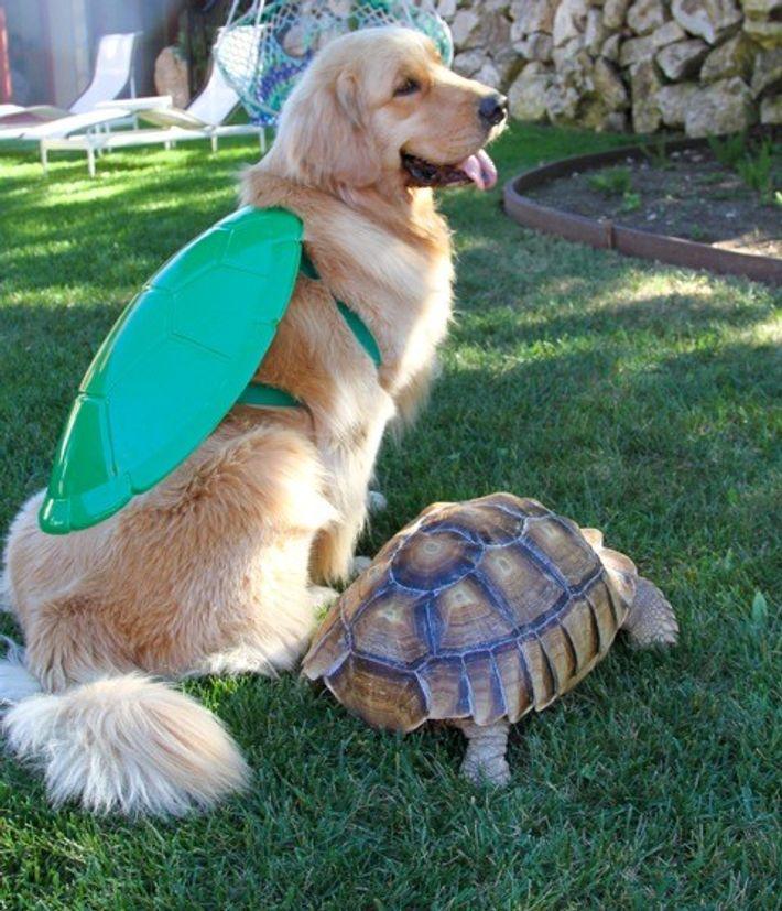 cachorro-tartaruga-melhores-amigos