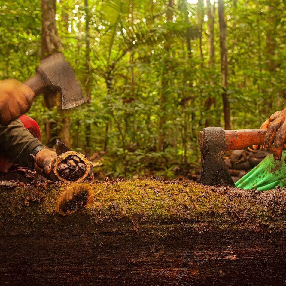 Como a economia de floresta em pé pode salvar a Amazônia – e o planeta
