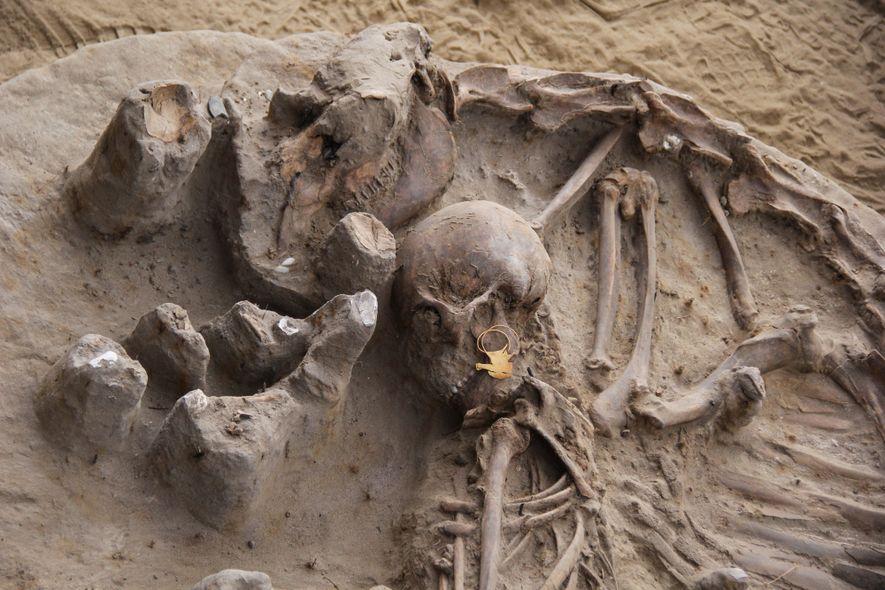 Esqueleto de jovem mulher da primeira fase diaguita (ánimas) junto com oferenda de camélido adulto (900 ...