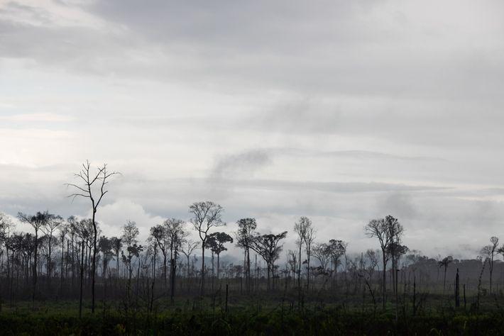 09-rondon-soosevelt-reserva-guariba-amazonia