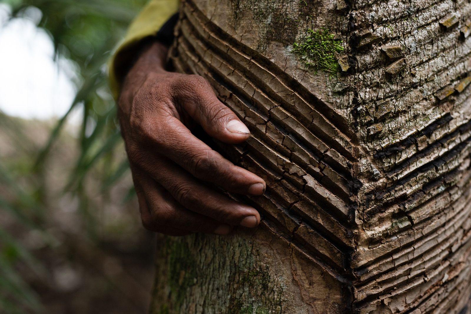 Com extrativismo sustentável, povos da floresta resistem ao desmatamento
