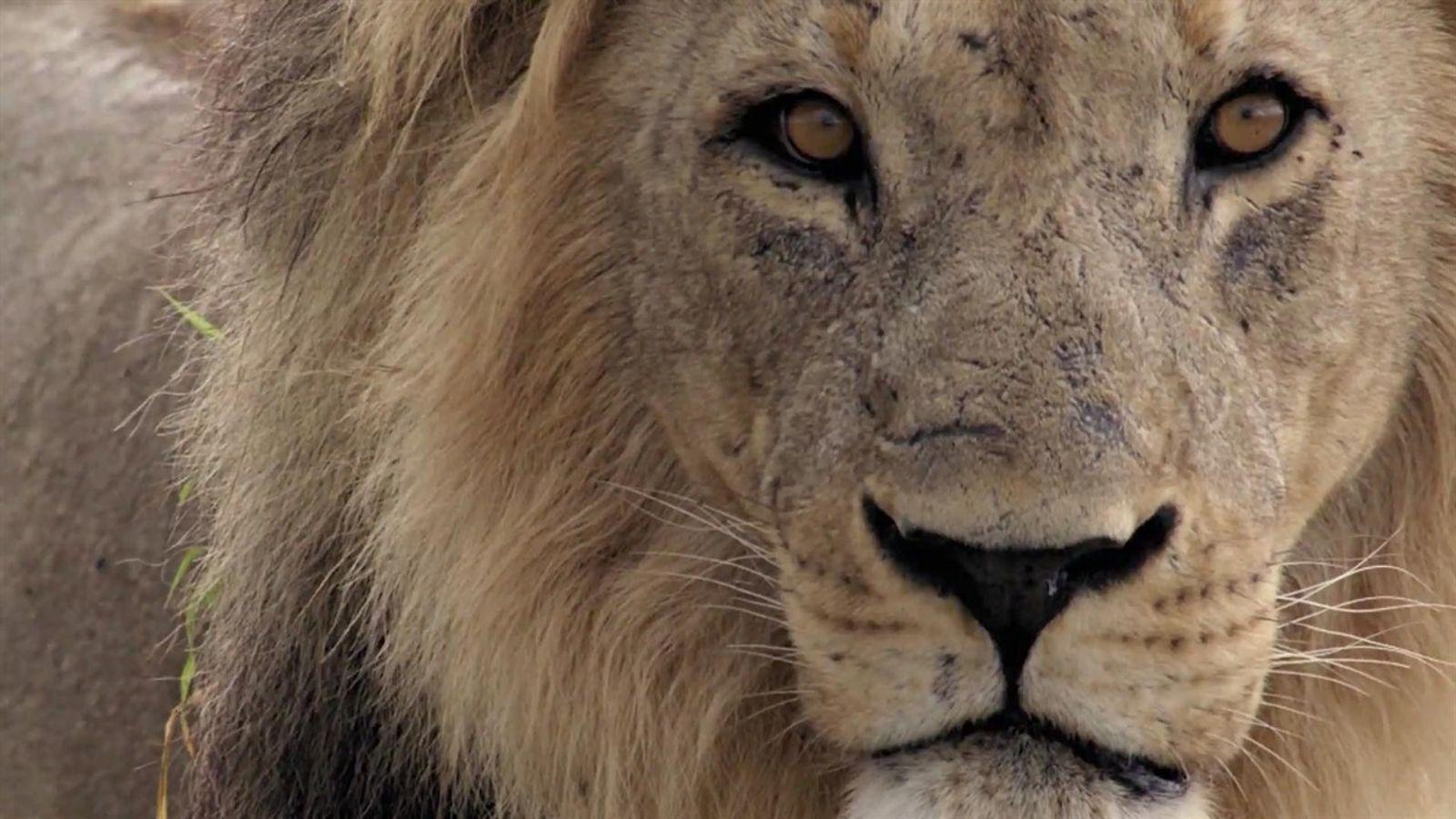 Império Selvagem: Nova temporada no Nat Geo WILD