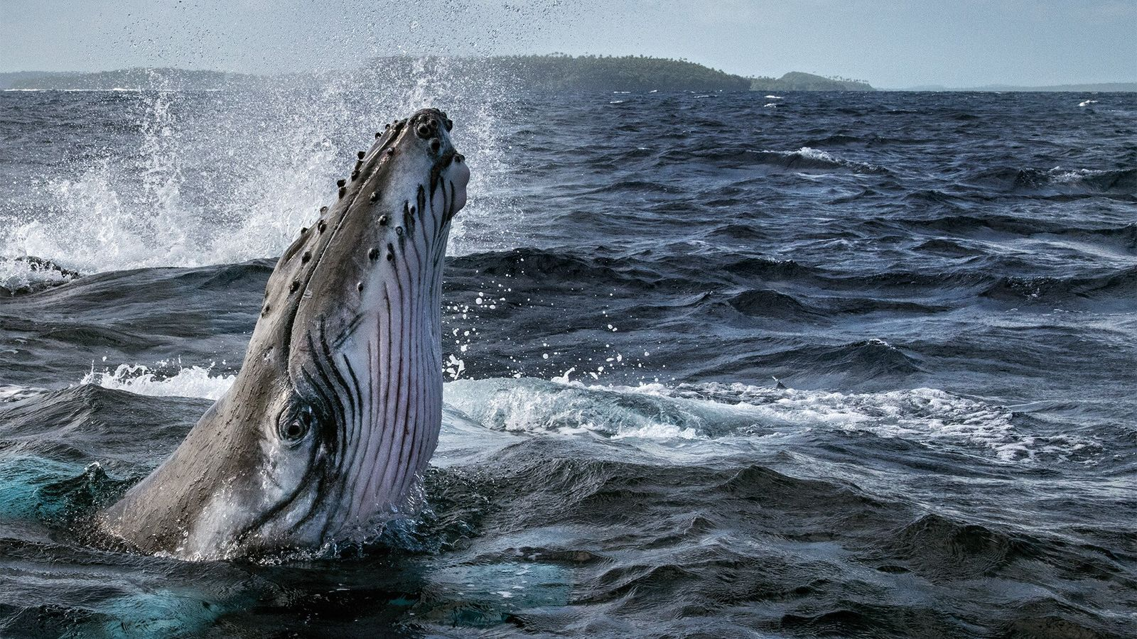 O Segredos das Baleias