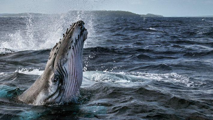 Segredos das Baleias