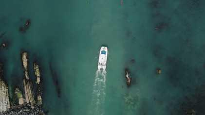 Kaikōura – Encontro com golfinhos