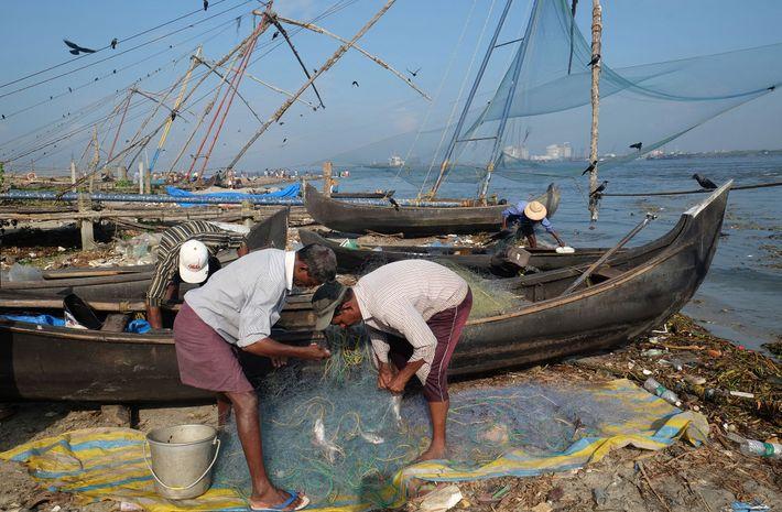 Pescadores em Kochi (também conhecido como Cochin) em Kerala separam o que pescaram.