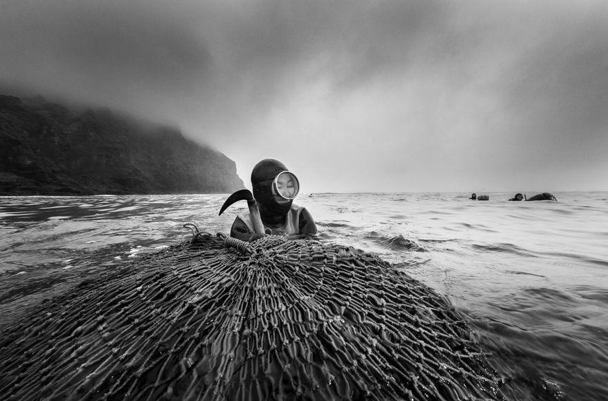 As mergulhadoras são um exemplo de longevidade. Elas caminham sobre o terreno costeiro para mergulhar em ...