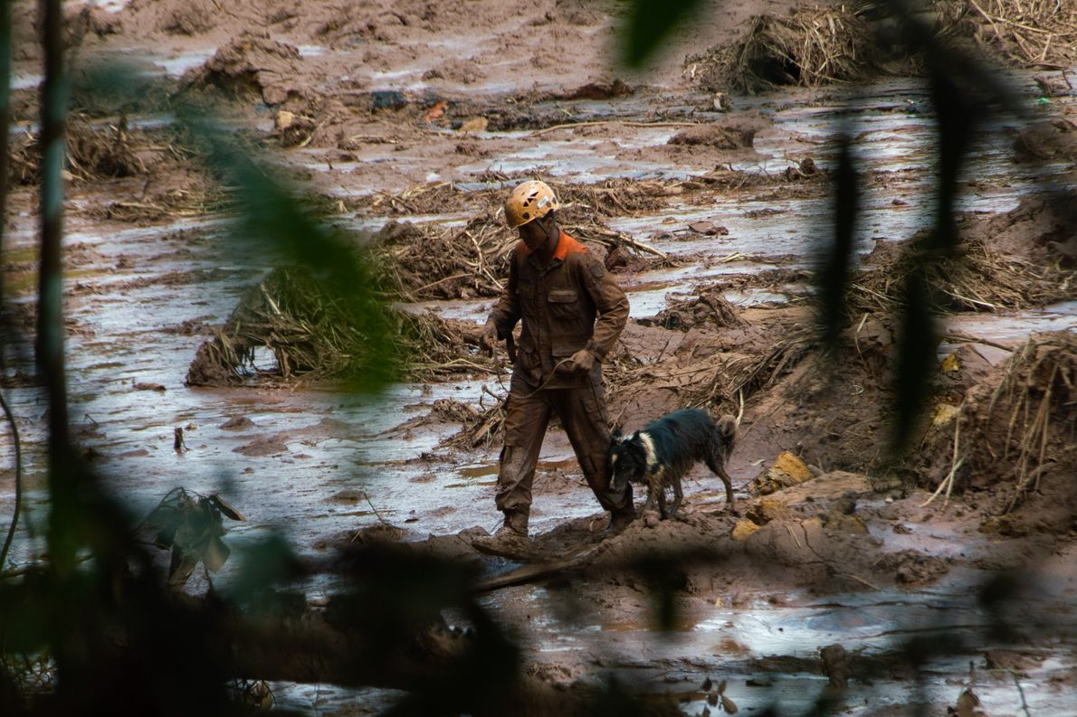 Cães ajudam na busca por corpos depois do rompimento da barragem em Brumadinho (MG).