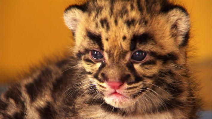 Dia a dia dos leopardos