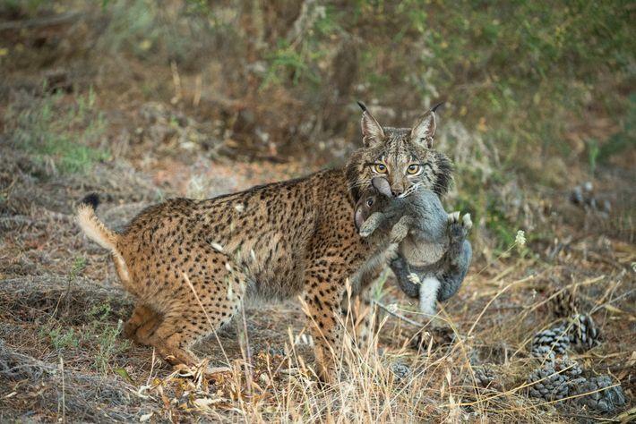 os-pequenos-gatos-selvagens