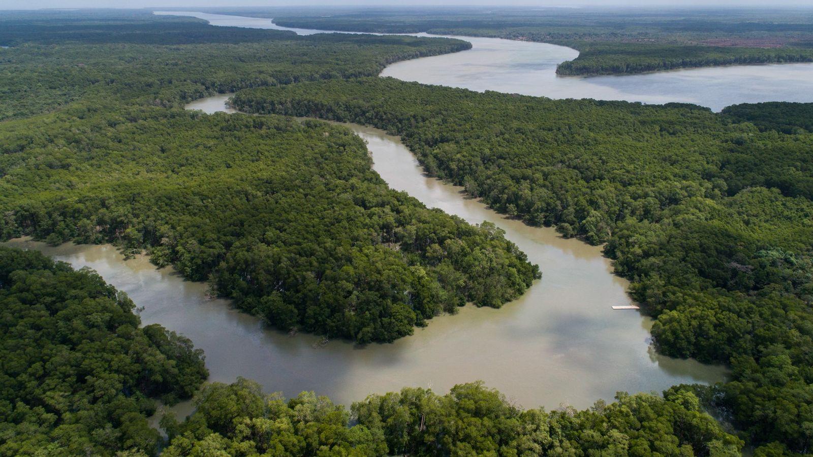 Região de mangues próxima à comunidade Furo da Deolândia, na Resex São João da Ponta, Pará. As reentrâncias ...