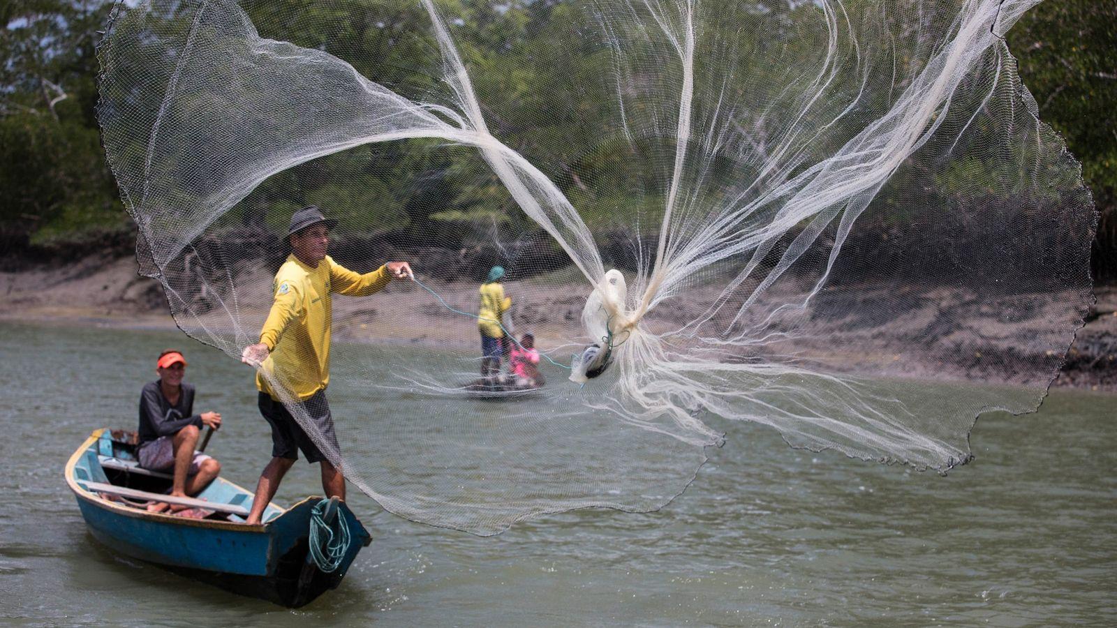 Aloizio do Rosário Blanco e o filho, Aloizio do Rosário Junior, pescam camarão-branco com rede de tarrafa ...