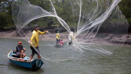 Nas reentrâncias amazônicas, comunidades equilibram conservação e extrativismo