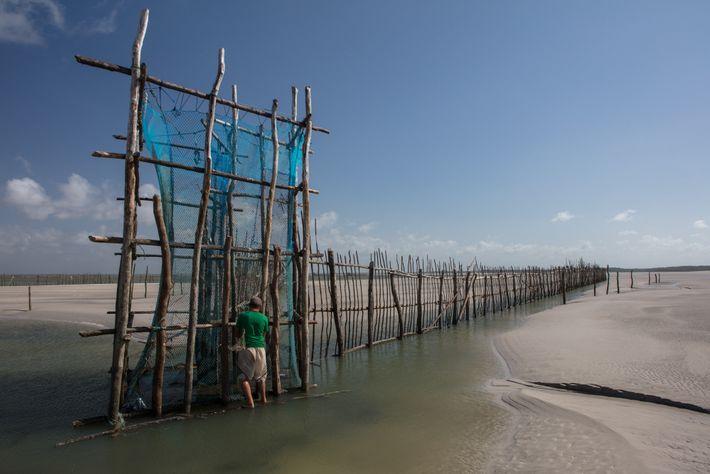 Pescador checa curral de pesca durante a maré baixa na Resex Marinha de Caeté-Taperaçu no Pará.