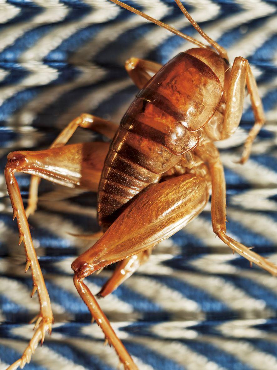 Insetos na sua dieta? Ok. Mas esqueça logo a visão de formigas tostadas e pense num ...