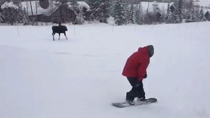 Alce surpreende praticantes de snowboard em uma perseguição pela montanha