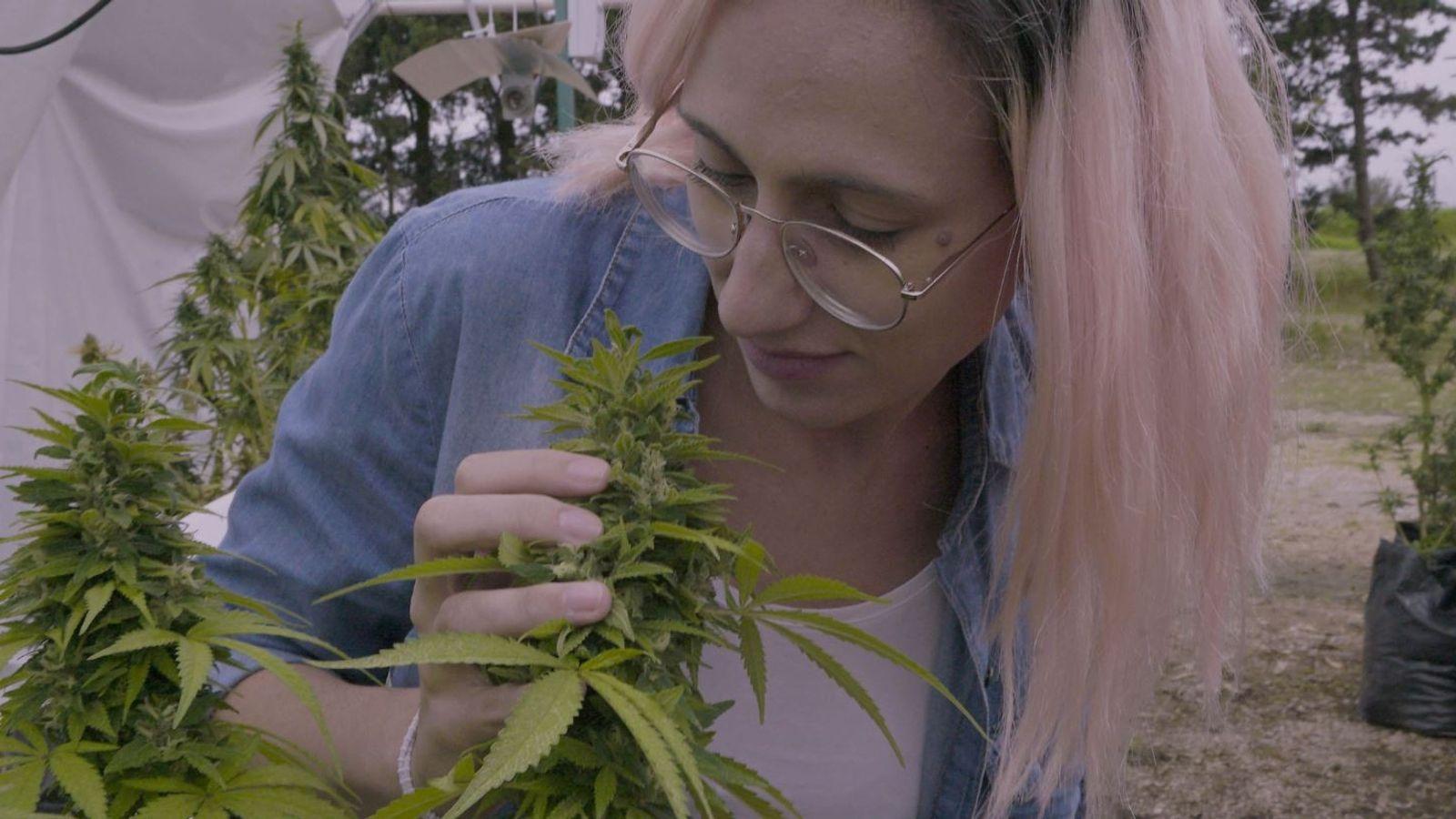 A repórter Ivana Szerman conhecerá os usuários da cannabis e os riscos que correm para que ...