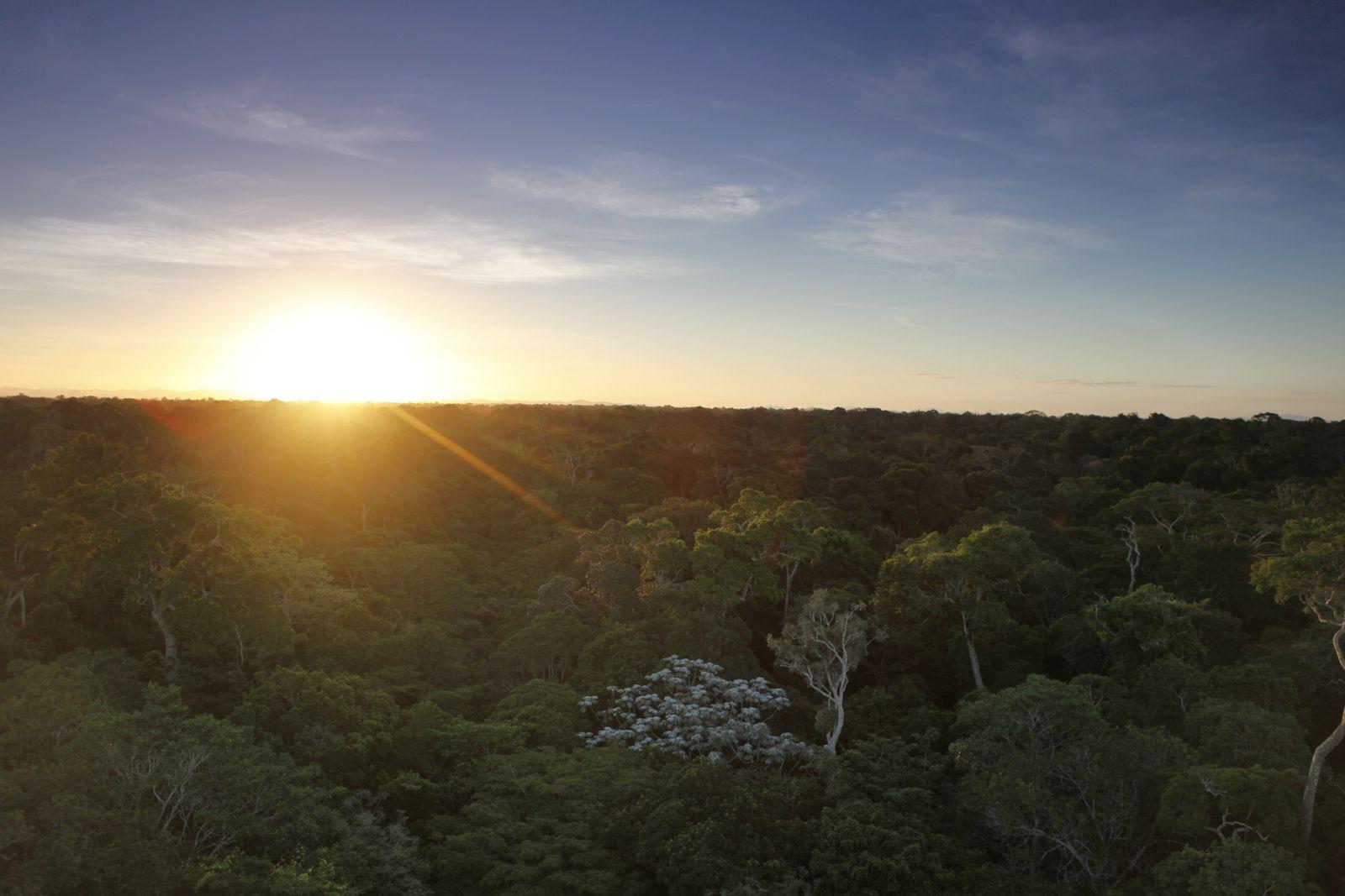 A Floresta de Tabuleiro é como é chamada a formação da Mata Atlântica em áreas de ...
