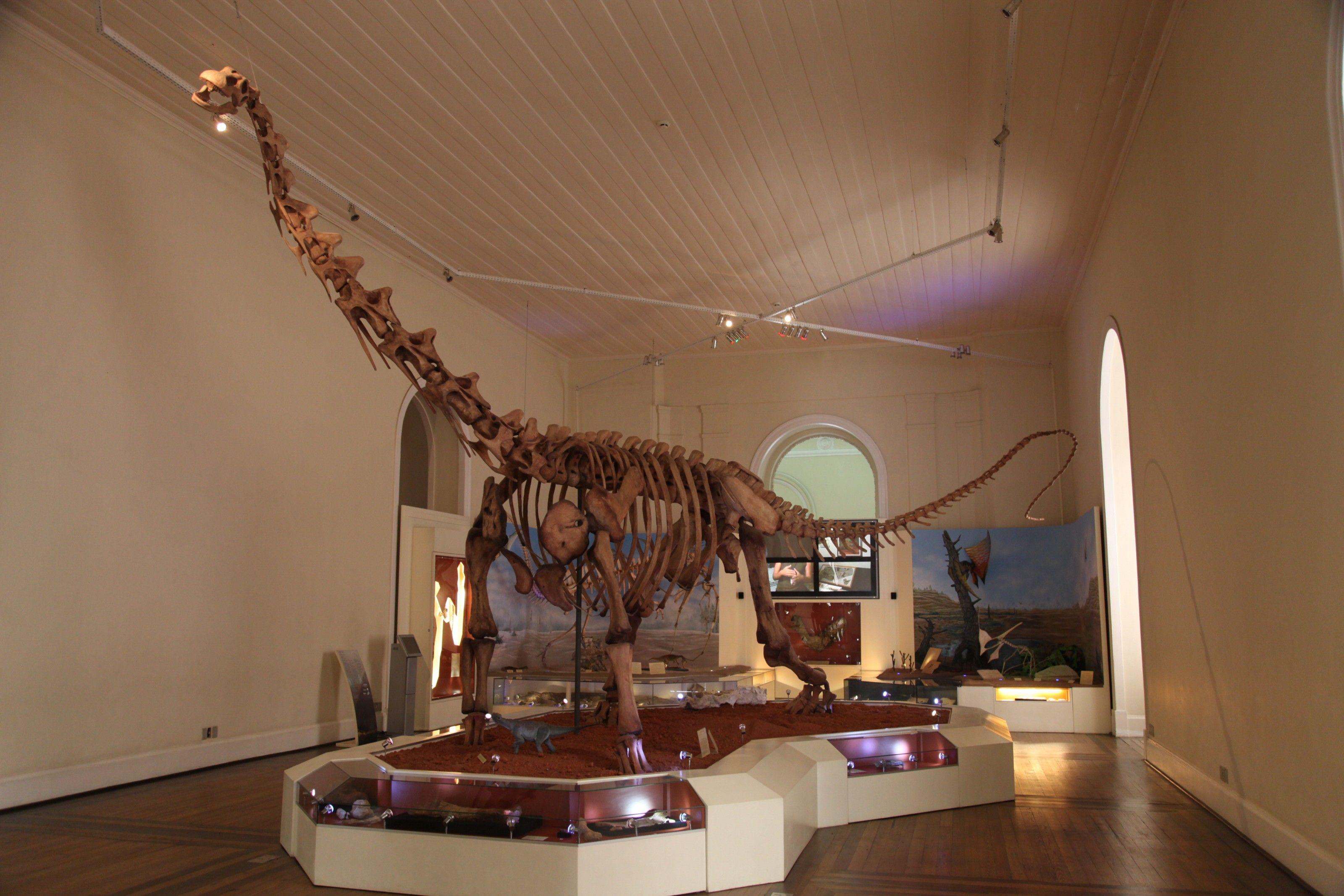 Mesmo com acervo destruído pelo incêndio, Museu Nacional já planeja novas exposições | National Geographic