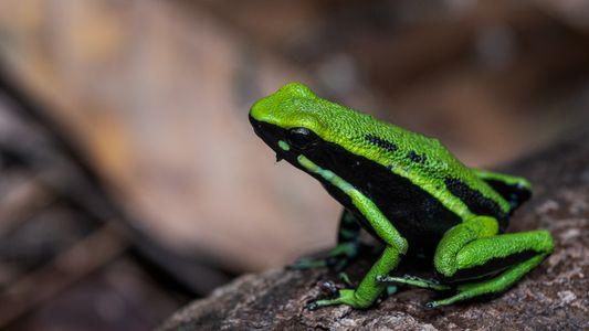 Cientistas registram a biodiversidade do Parque Nacional da Serra do Divisor, no Acre