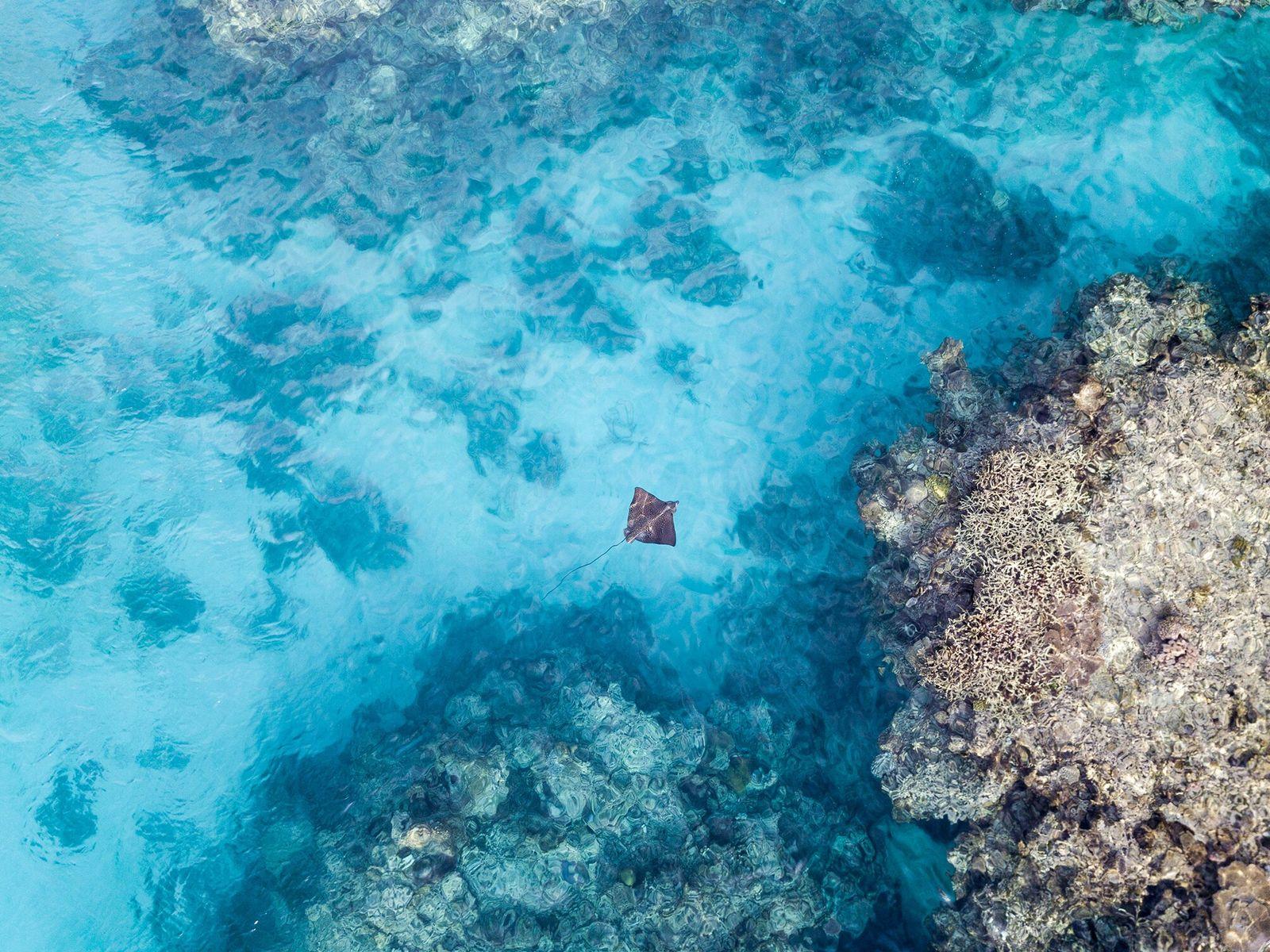 Nova Caledônia   As águas cristalinas da Nova Caledônia abrigam mais de nove mil espécies marinhas, ...