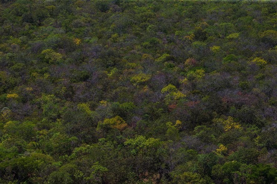 O Cerrado é a savana mais biodiversa do planeta, mas é um dos biomas mais vulneráveis ...