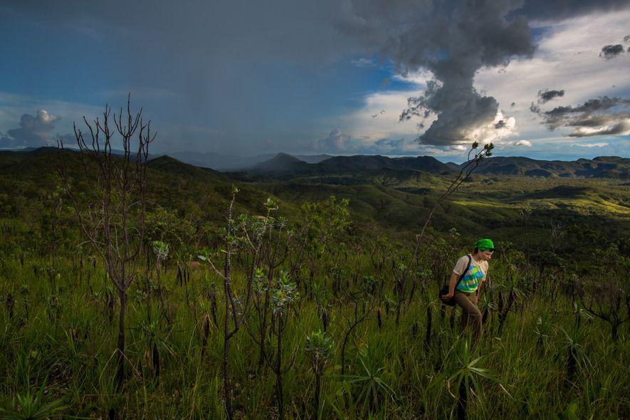 Engenheira florestal da Fundação Grupo Boticário, Natacha Sobanski caminha no alto de uma montanha da Reserva ...