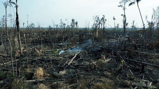Dia Mundial Contra Mudanças Climáticas, no National Geographic