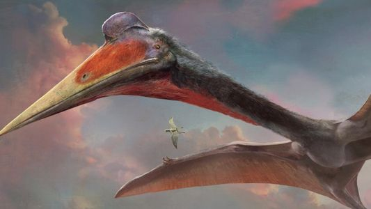 101| Pterossauro