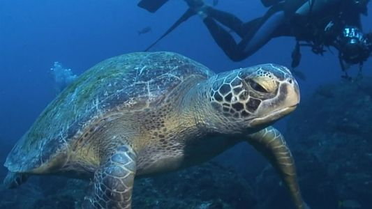 101 | Tartarugas-marinhas