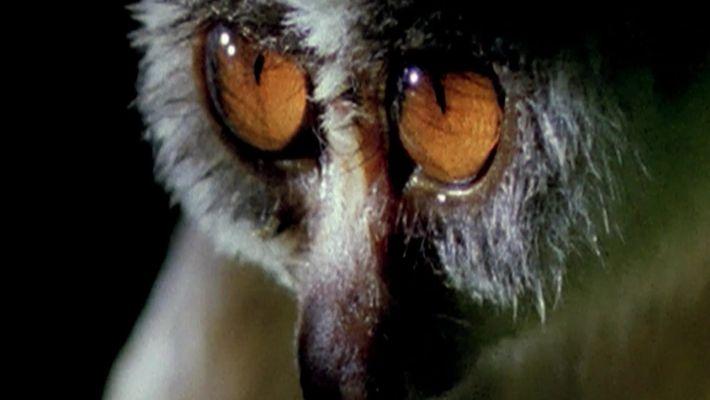 Quais animais possuem visão noturna?