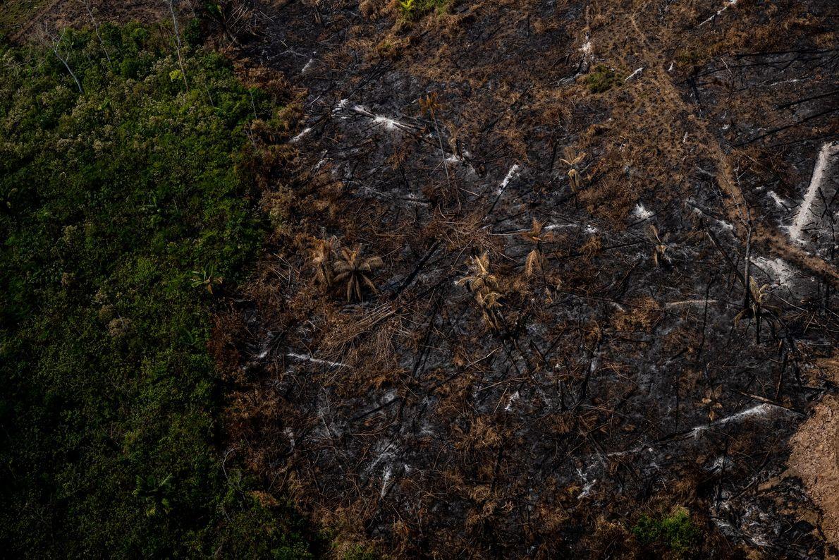 Região de floresta desmatada na Amazônia acreana.