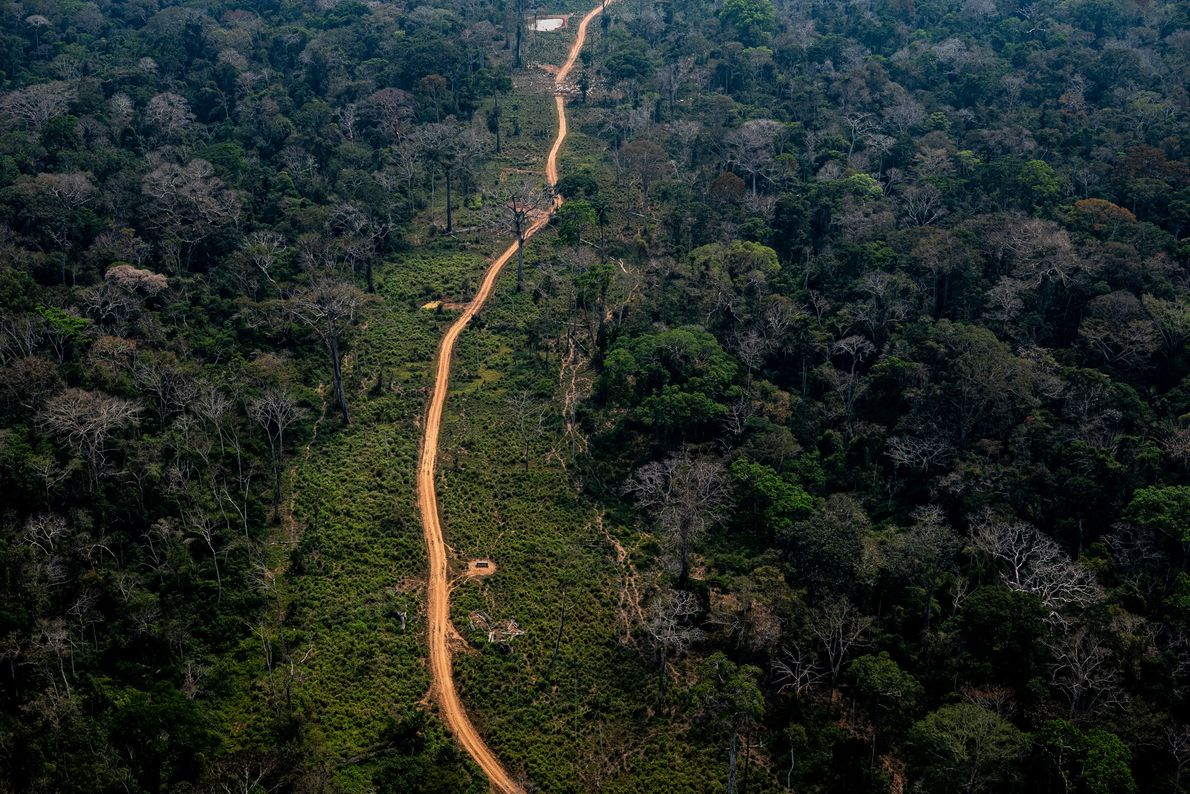 Área de floresta Amazônica no Acre. Os pontos de desmatamento são facilmente identificáveis por imagens de ...