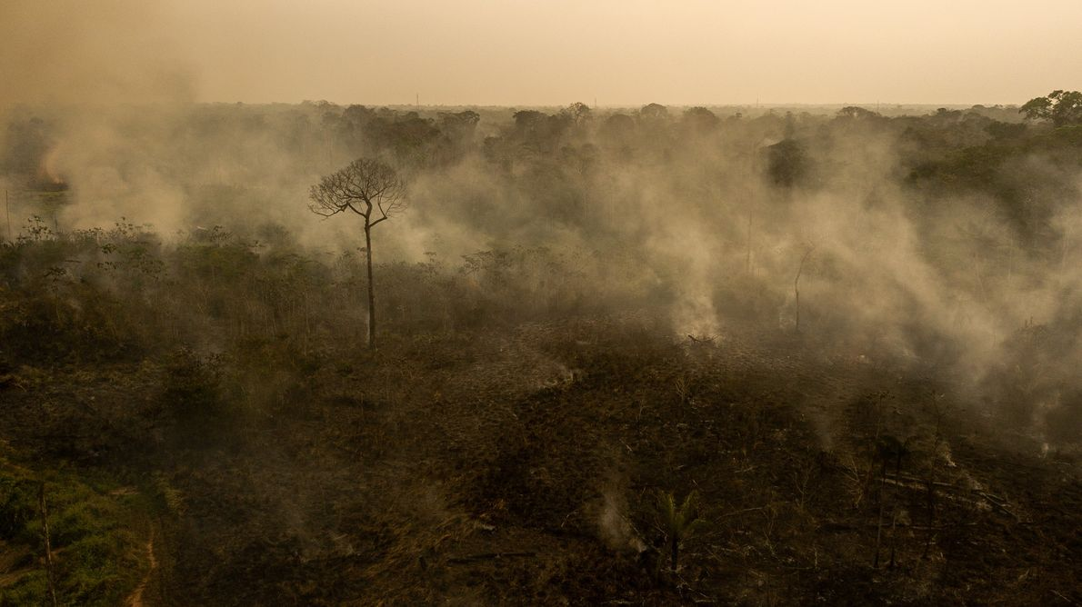 Fogo no Projeto Floresta Estadual do Antimary, no Acre. Mesmo as recentes chuvas não foram suficientes ...