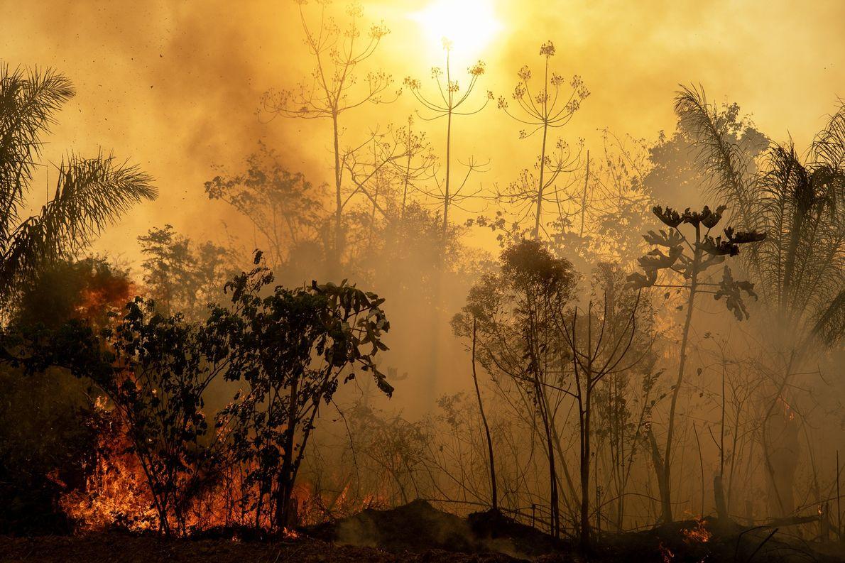 Fogo atinge trecho de floresta amazônica no Acre. A temporada de seca e calor vai de ...