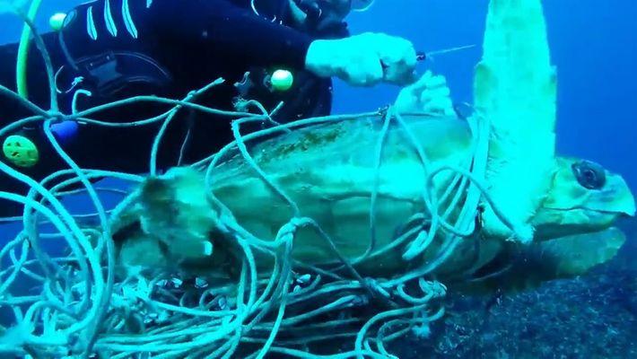 Mergulhadores libertaram tartaruga marinha de rede de pesca