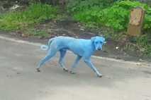 thumb-cachorro-azul