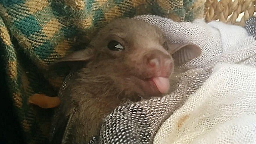 Como morcegos aprendem a se comunicar com sua colônia