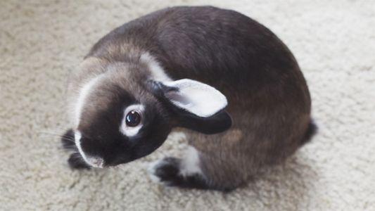 Mesmo com grave problema de saúde, coelhinha consegue viver bem