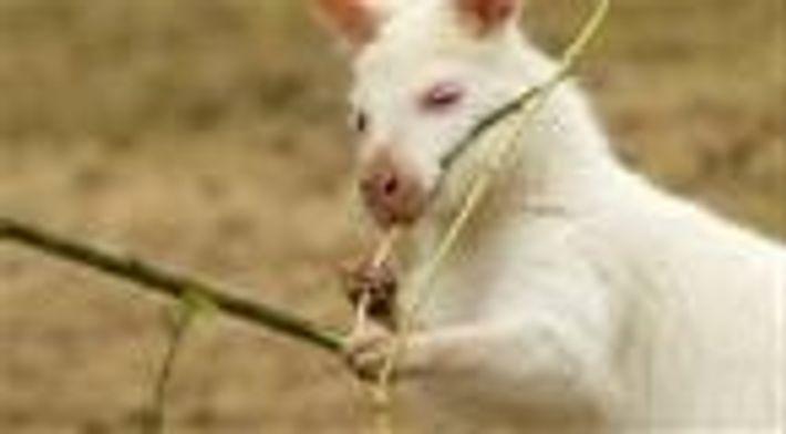 Entenda as condições genéticas que deixam estes animais inesperadamente brancos