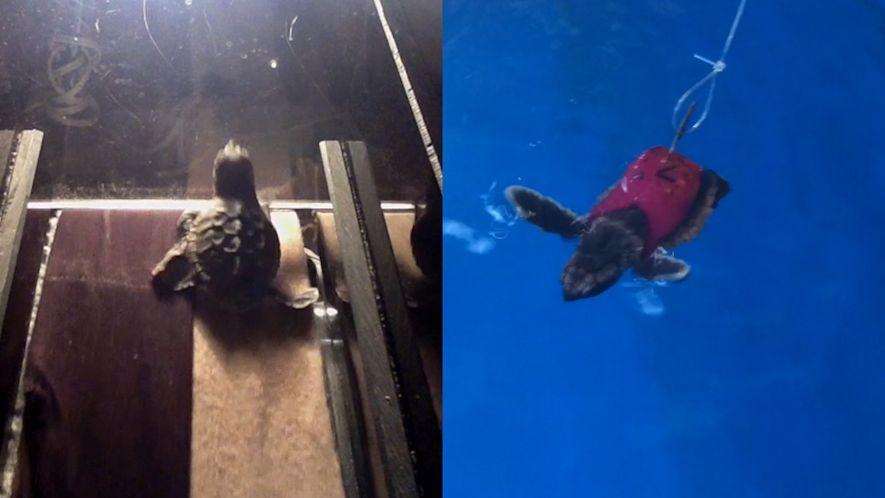 O risco da poluição luminosa para as tartarugas-marinhas