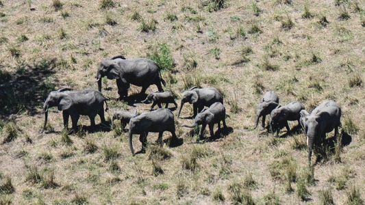 Uma guerra civil devastou a biodiversidade deste local — um parque nacional ajudou a trazê-la de ...