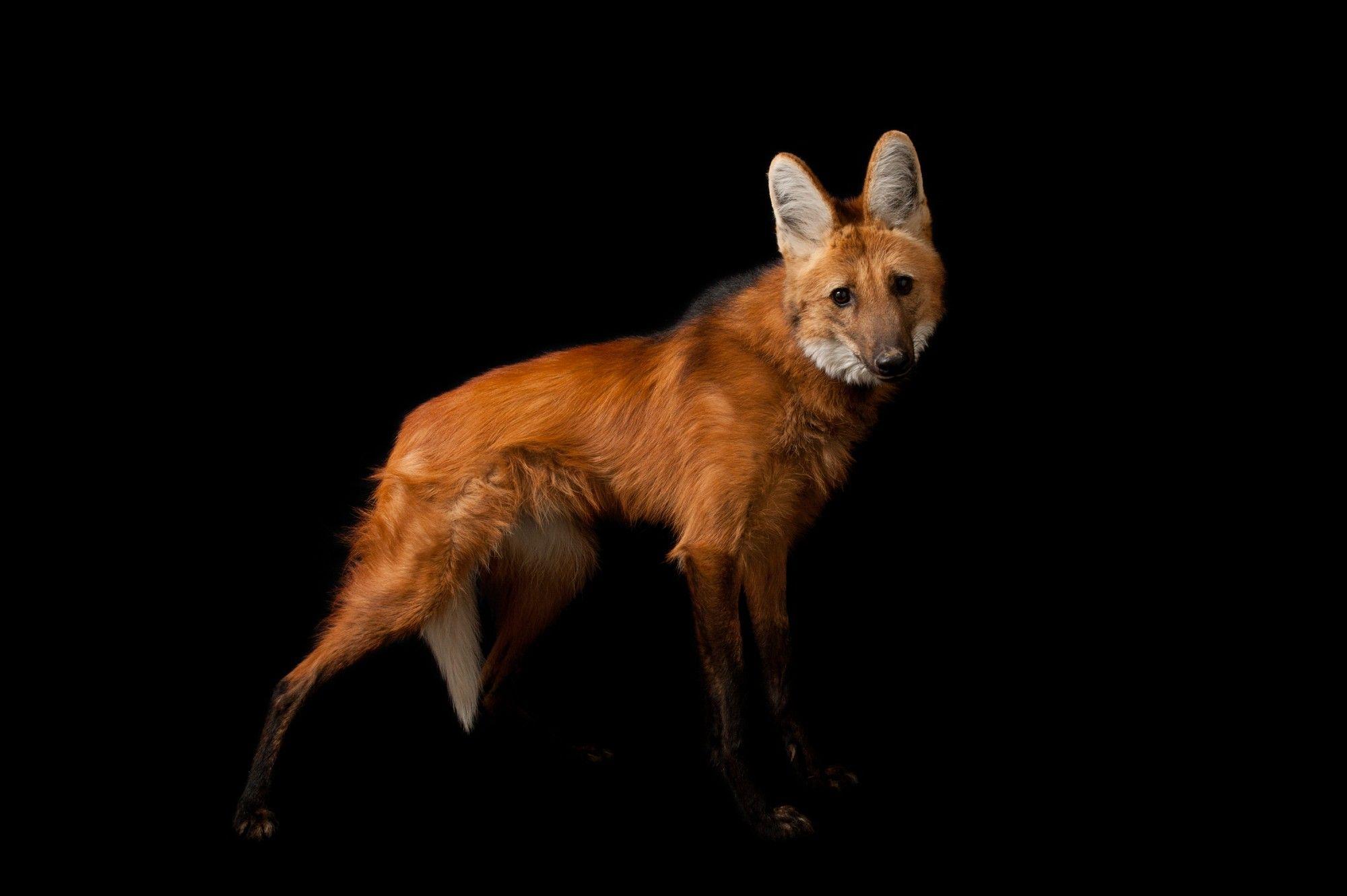 Galeria de fotos: 11 animais encontrados no Cerrado | National Geographic