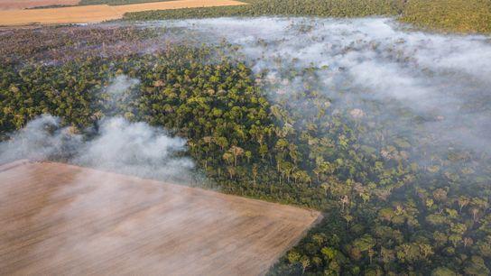 desmatamento-amazonia