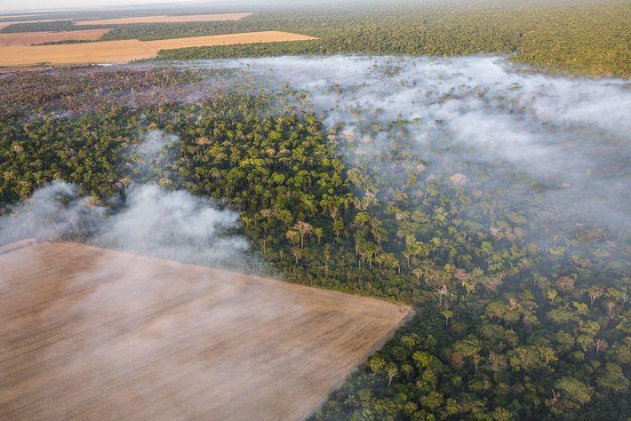 Produtores rurais desmatam pedaço da floresta para cultivo de milho e soja no Mato Grosso. Com ...