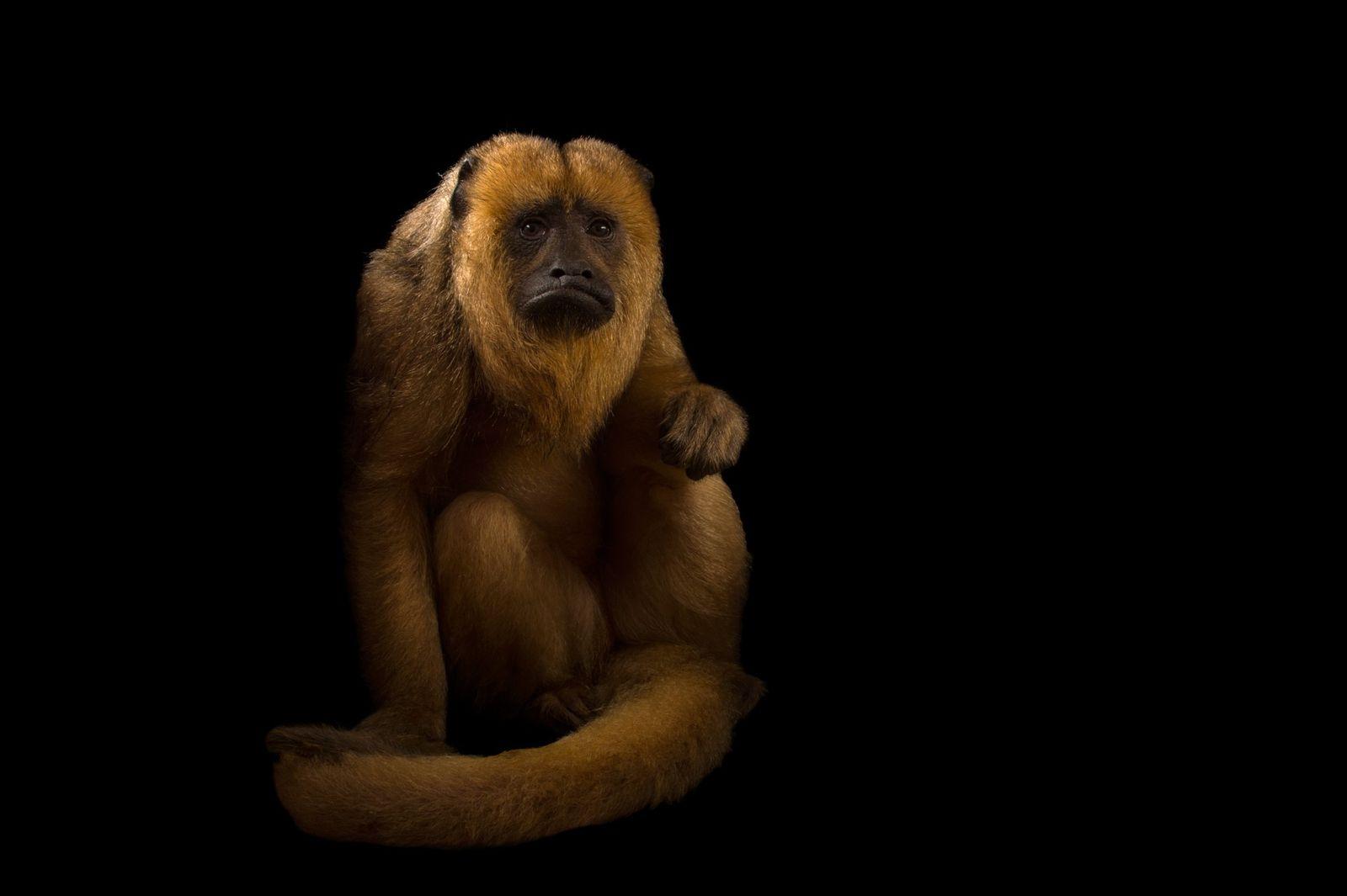Fotos: confira a exuberância de 10 animais encontrados no Cerrado